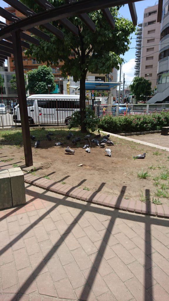 鳩の休憩所船森公園八王子市