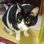 猫(トムキャット)