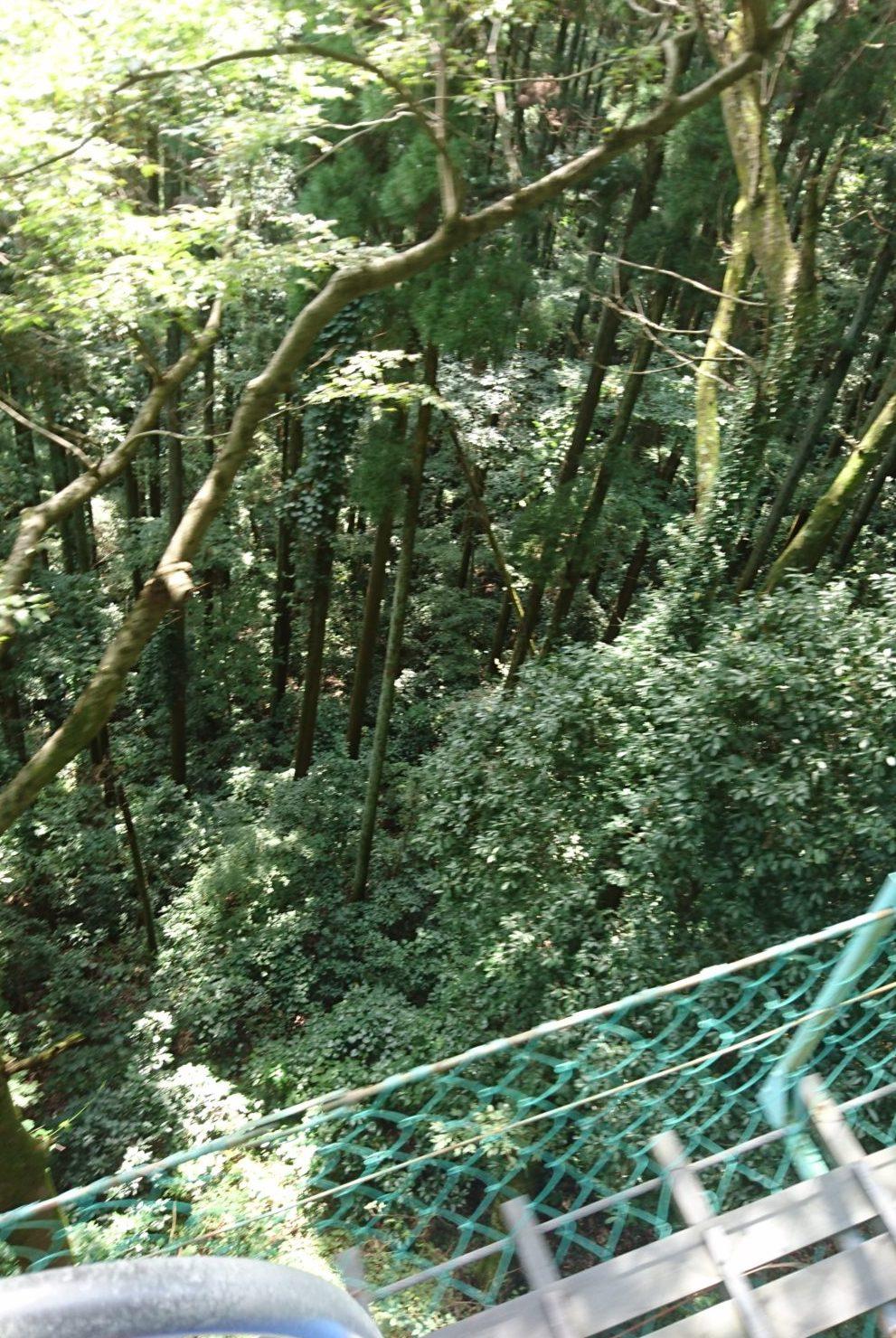 高尾山のリフトからの景色