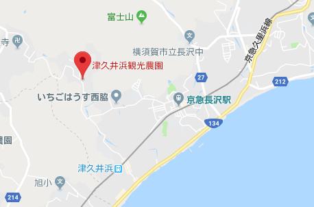 津久井浜観光農園のイチゴ狩り