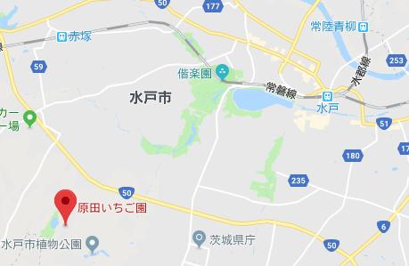 原田いちご園のイチゴ狩り